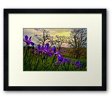 Wild Beauty ~ Wild Iris ~ Framed Print