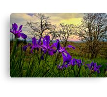 Wild Beauty ~ Wild Iris ~ Canvas Print