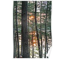 Sunset Through the Trees - Kennebec Lake Ontario Poster