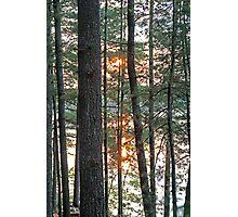 Sunset Through the Trees - Kennebec Lake Ontario Photographic Print