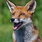 I love Jokes! Tell me Another!!! ;o) by Krys Bailey