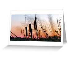 Sunrise over the Cattails Greeting Card
