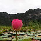 Lotus flower  by Nirmal  Ghosh