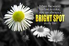 Bright Spot in My Life (Card) by Tracy Friesen
