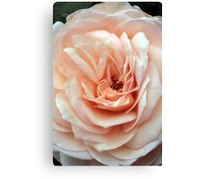 A Rose's Delicate Gown Canvas Print