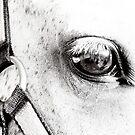 Equine Eye  by Marcia Rubin