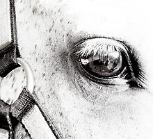 Equine Eye  by Marcia Rubin