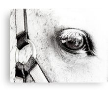 Equine Eye  Canvas Print