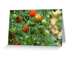 Wet Cherry Tomatoes Greeting Card