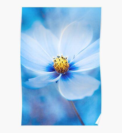 Midnight Blue Poster