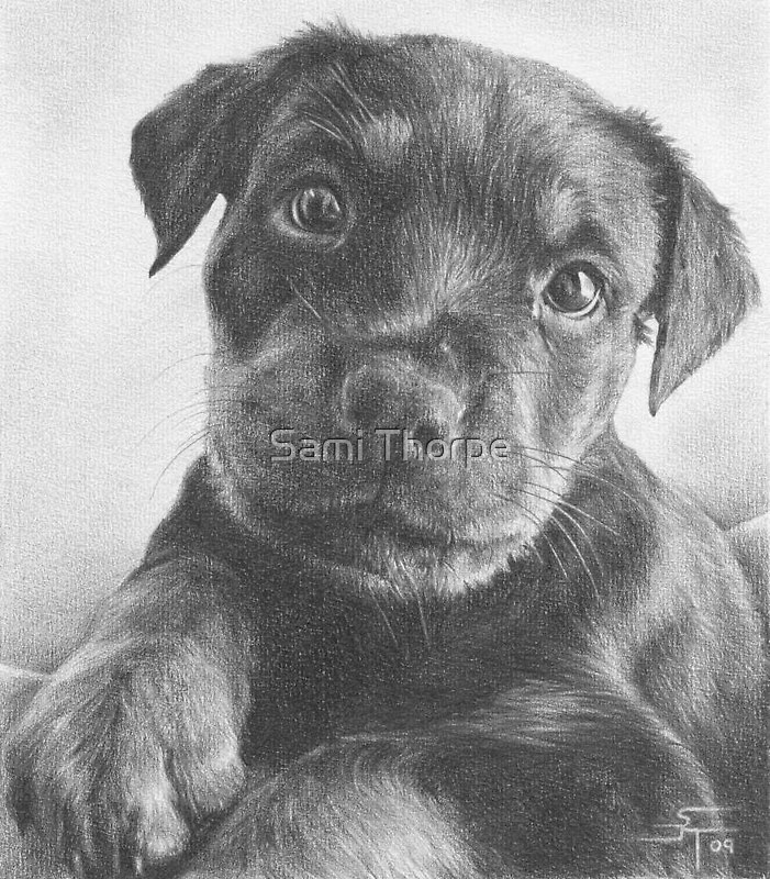 Portrait Commission (Rotty) by Sami Thorpe