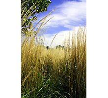Grasslands Photographic Print