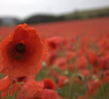 Poppies In The Rain by yampy