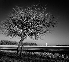 Bare Tree and the Papal Cross - Phoenix Park by Dave  Kennedy