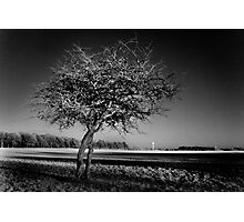 Bare Tree and the Papal Cross - Phoenix Park Photographic Print