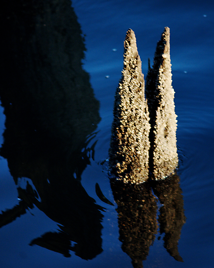 Barnacles by Barry Doherty