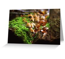 Mushrooms on Tree Trunk  Greeting Card