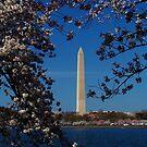 Washington DC At Its Best by Eileen Brymer