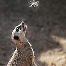 Meercatching fairies! by LisaRoberts