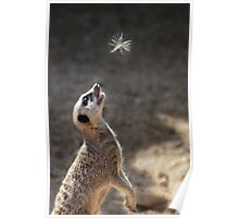 Meercatching fairies! Poster