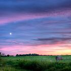 Prairie Sunset - Saskatchewan, Canada by camfischer