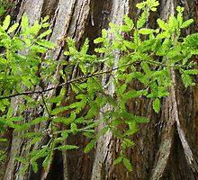 Redwood Tree Trunk Green Forest art prints Baslee by BasleeArtPrints