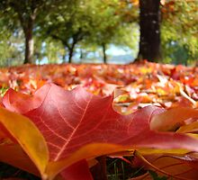 Colorful Autumn Tree Leaves across lawn Landscape Baslee by BasleeArtPrints