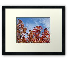 Autumn Trees art prints Blue Sky White Clouds Fall Leaves Framed Print