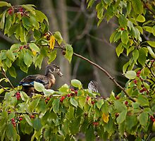 Wild Berry Woodies by Scott Denny