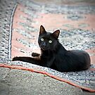 Black Cat on a Persian Rug by Glennis  Siverson