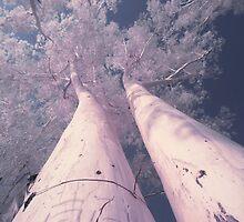 ir_tree by hkavmode