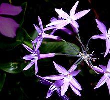 Purple star flower combo by ?? B. Randi Bailey