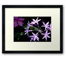 Purple star flower combo Framed Print