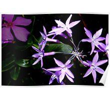 Purple star flower combo Poster