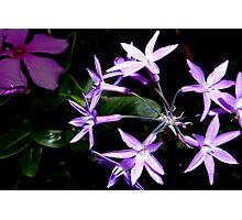 Purple star flower combo Photographic Print