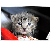 赤ちゃん猫 (Baby cat) Poster