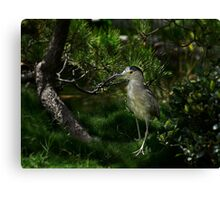 Heron checking out new digs Canvas Print