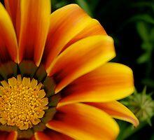 Flower in bloom by jesscob23