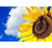 I Need Sun! Photographic Print