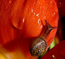 It's A Snail's Life by Amy Dee