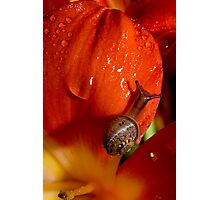 It's A Snail's Life Photographic Print
