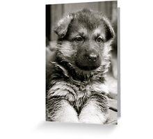 Sweet As Candy (German Shepherd Puppy) Greeting Card