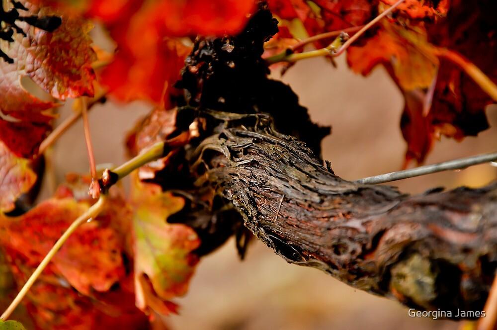 Warrabilla Wines, Rutherglen - Autumn Vine by Georgina James