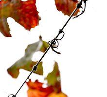 Warrabilla Wines, Rutherglen Autumn in the Vineyard by Georgina James