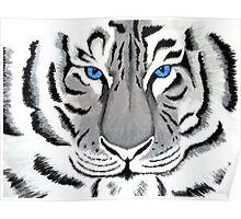 White Tiger with Piercing Blue Eyes Poster