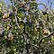 Bats in Tree or are they Flying Foxes by Josephine Caruana