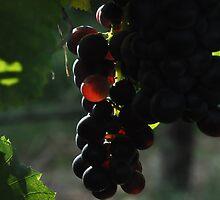 Bull Paddock Wines, Rutherglen - Sunshine Grape by Georgina James