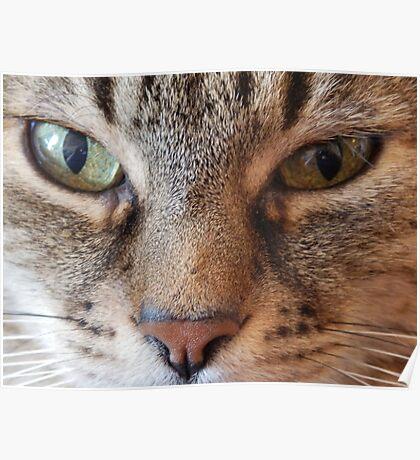 Hypnotizing eyes Poster