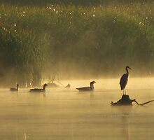 Heron in the Mist by lorilee