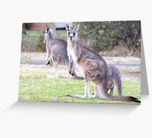 Kangaroos have pink tongues too Greeting Card